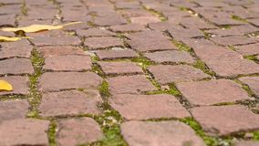 Leaves on pavement in autumn stock footage