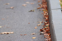 Leaves at pavement Stock Images