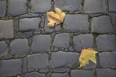 The leaves on the pavement Stock Photography