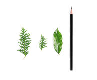 Leaves and pencil. On white background Royalty Free Stock Photos