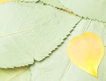 Leaves and petals background Stock Photo