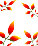 Leaves petals illustration autumn nature red yellow Royalty Free Stock Photo