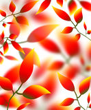 Leaves petals illustration autumn nature red yellow Royalty Free Stock Image