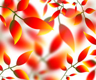 Leaves petals illustration autumn nature red yellow. 2017 Stock Photo