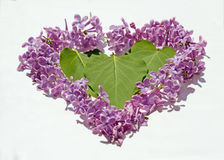 Leaves and petals lilac heart shaped (Valentine's Day, February Royalty Free Stock Photography