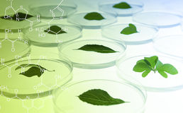 Leaves in Petri Dish Royalty Free Stock Photos