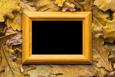 Leaves and photo frame Royalty Free Stock Images
