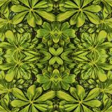 Leaves Photo Seamless Pattern Design. Digital photo collage and manipulation technique leaves nature motif seamless pattern design in green tones Royalty Free Stock Image
