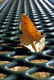 Leaves on picnic table in Jess Martin Park, Julian, California Stock Photos