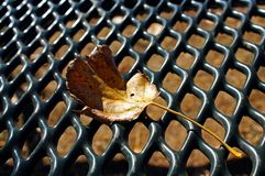 Leaves on picnic table in Jess Martin Park, Julian, California Royalty Free Stock Images