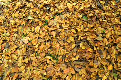 Leaves / Hojas Secas Royalty Free Stock Photo