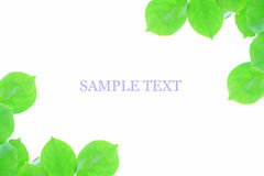 Leaves picture frame Royalty Free Stock Photo