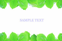 Leaves picture frame Royalty Free Stock Photography