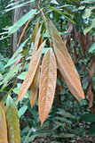 Leaves pigmentation Royalty Free Stock Image