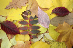 Leaves pile Stock Image