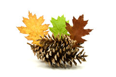 Leaves and pine cones Royalty Free Stock Photo