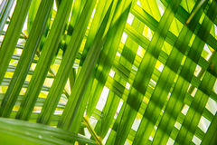 Leaves placed overlapping. Royalty Free Stock Photos