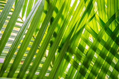 Leaves placed overlapping. Royalty Free Stock Images