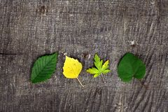 Leaves on a plank Royalty Free Stock Image