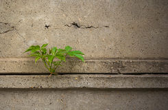 Leaves of the plant through a concrete fence.Dramatic look.Usefu Stock Image
