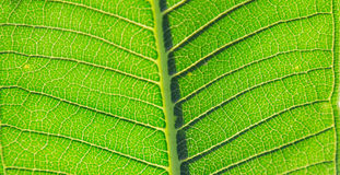 Leaves of plant Stock Image