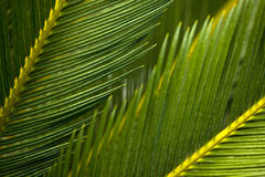 Leaves of a plant Royalty Free Stock Photo