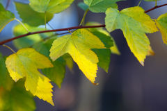 Leaves of plants in Autumn Royalty Free Stock Photos