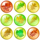 Leaves of plants, buttons Royalty Free Stock Photos