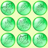 Leaves of plants, buttons, set Royalty Free Stock Images