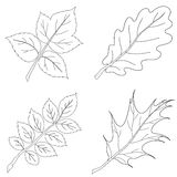 Leaves of plants, contour, set Royalty Free Stock Images