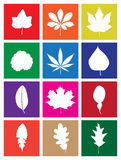 Leaves of Plants Flat Design Square Icons. Leaves of Popular Plants in Flat Design Square Icons Stock Photography
