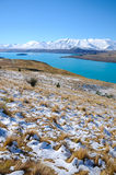Leaves or plants on Mountain white snow in winter, Paradise places in New Zealand. Aoraki Mount Cook National Park [1] is dominated by the peaks of Aoraki Mount Royalty Free Stock Photography