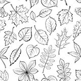 Leaves of Plants Pictogram, Seamless. Seamless Pictogram Tree Leaves Dogrose, Oak, Iberian Oak, Maple, Liquidambar, Hawthorn, Poplar Silver, Hazel, Elm, Birch Royalty Free Stock Photos