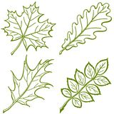 Leaves of plants, pictogram, set Royalty Free Stock Photos