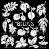 Leaves of Plants Pictogram Set Stock Images