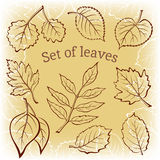 Leaves of Plants Pictogram Set Royalty Free Stock Images