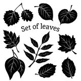 Leaves of Plants Pictogram Set Stock Photography