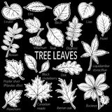 Leaves of Plants Pictogram Set. Pictograms Set, Tree Leaves, Dogrose, Oak, Iberian Oak, Maple, Liquidambar, Hawthorn, Poplar Silver, Hazel, Elm Birch Linden Stock Photos