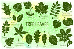 Leaves of Plants Pictogram Set Royalty Free Stock Photography