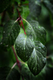 Leaves and Plants in Rainstorm Stock Photo