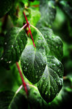 Leaves and Plants in Rainstorm Royalty Free Stock Photos