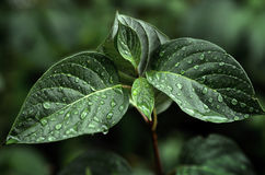 Leaves and Plants in Rainstorm Royalty Free Stock Photography