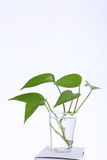 Leaves in a Plastic cup Royalty Free Stock Image