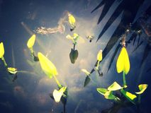 Leaves. In a pond Stock Photo
