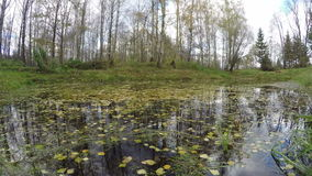 Leaves on the pond, time lapse 4K stock video footage