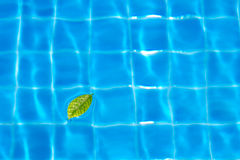 Leaves on pool Stock Photos