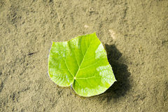The leaves. The pool of contracted a leaf green Royalty Free Stock Photography