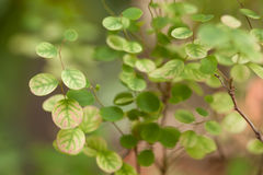 Leaves a pretty small,Tree leaves spotted the small round Royalty Free Stock Images