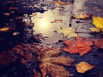 Leaves in a puddle and reflection of the autumn sun. stock images