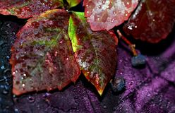 Leaves and rain ... Stock Image